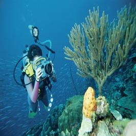 潜水俱乐部