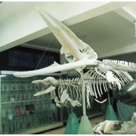 海洋生物标本馆