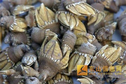 海鲜种类图片及名称 史上最全海鲜种类名字及大全图片