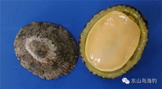 海螺图片大全来了,东山岛最全的海螺图片及名称,收藏着有用哦!